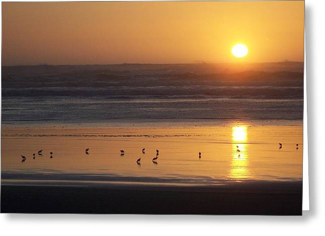 Sandpipers At Sunset Greeting Card by Peter Mooyman
