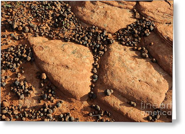 Sandstone And Pebbles Greeting Card by Gary Whitton