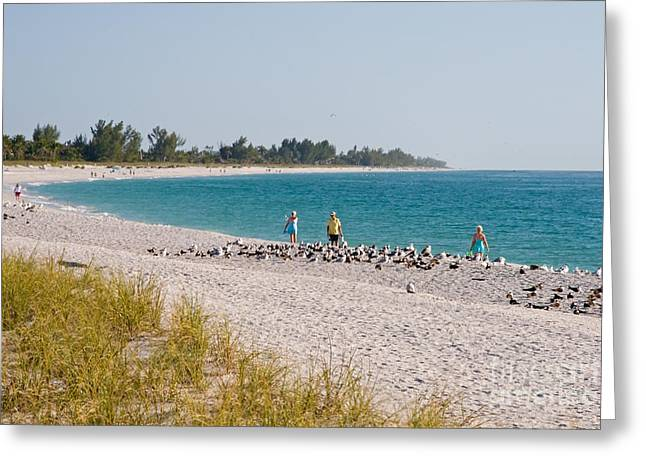 Sanibel Island Florida Summer Beach Greeting Card by ELITE IMAGE photography By Chad McDermott