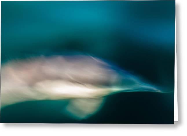 Santa Barbara Dolphin One Greeting Card by Josh Whalen