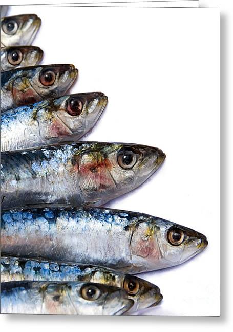 Sardines Greeting Card by Jane Rix