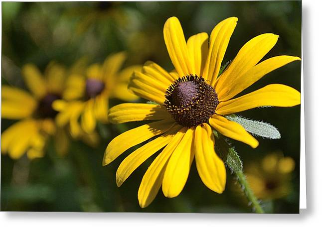 Sassy Yellow Greeting Card by Alan Seelye-James
