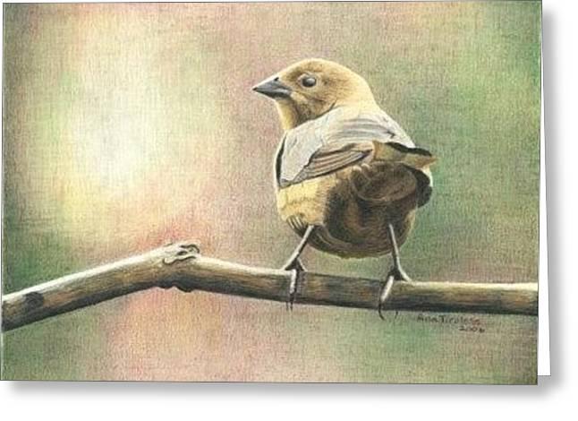 Saucy Cowbird Greeting Card