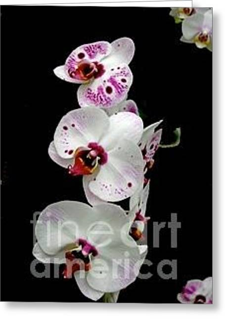 Saucy Orchid Greeting Card by Joan McArthur