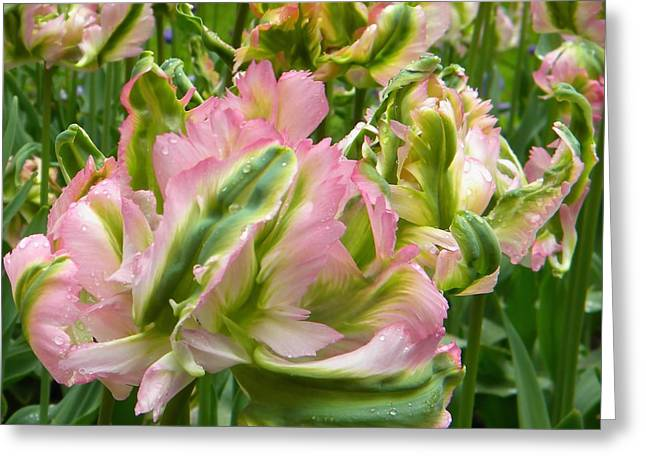 Sauvage Tulipes Greeting Card