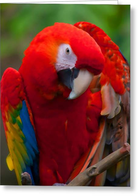 Greeting Card featuring the photograph Scarlet Macaw by Cindy Haggerty