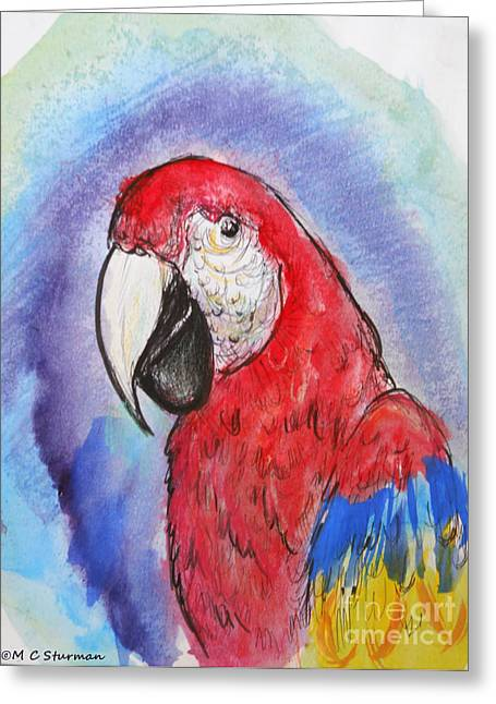 Scarlet Macaw Greeting Card by M C Sturman