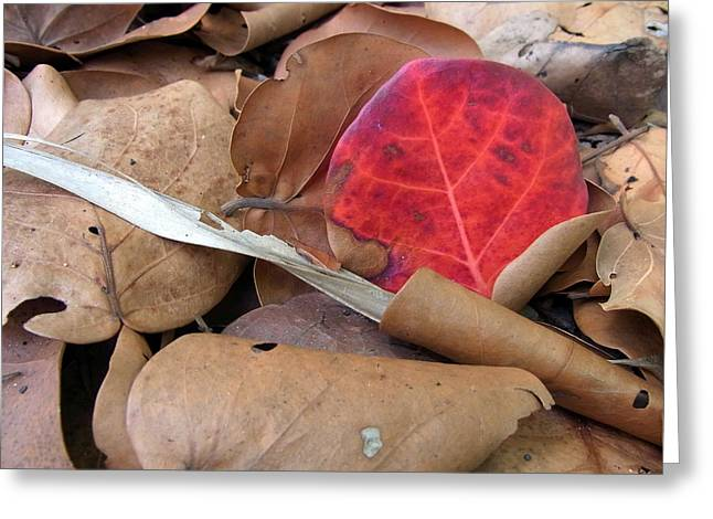 Scarlet Seagrape Leaf Still Life Greeting Card