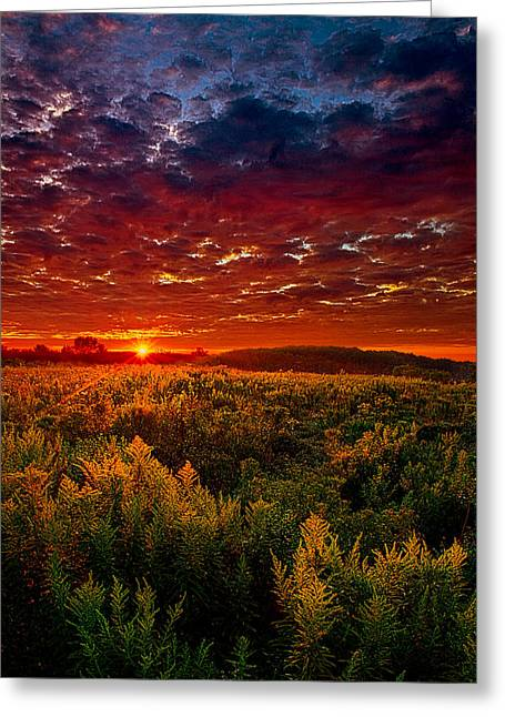 Scarlett Greeting Card by Phil Koch