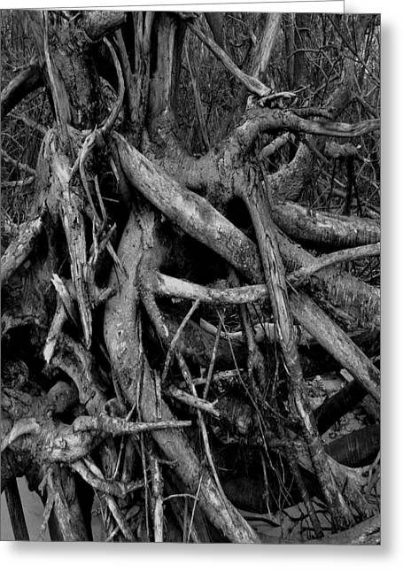 Scary Branches Greeting Card