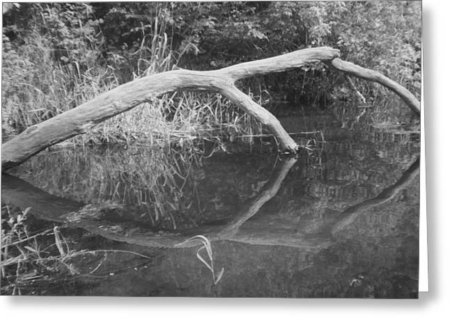 Scenes From The Kayak.   Downed Trees Of The Ec River Back Waters Part 2 Greeting Card by Artist Orange