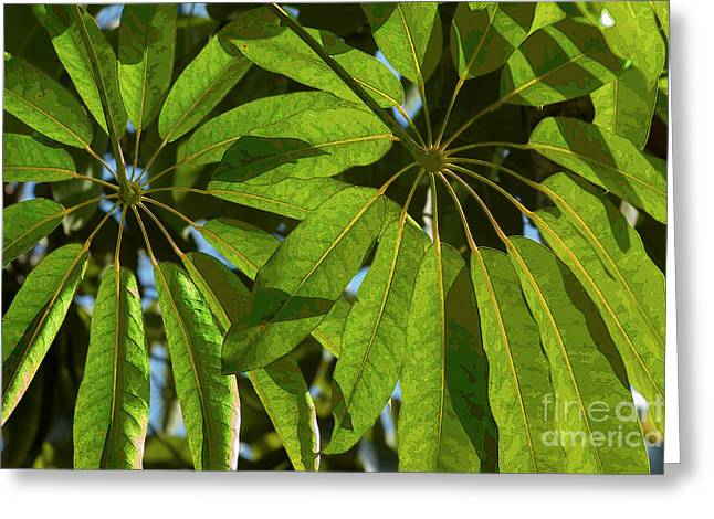 Schefflera Greeting Card
