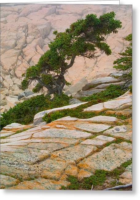 Schoodic Cliffs Greeting Card