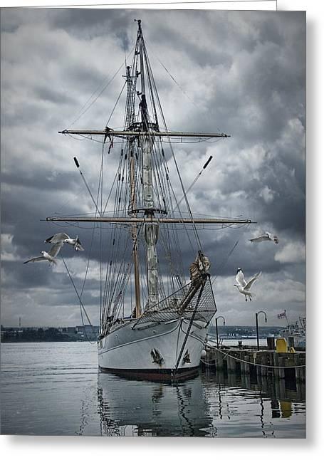 Schooner In Halifax Harbor Greeting Card by Randall Nyhof