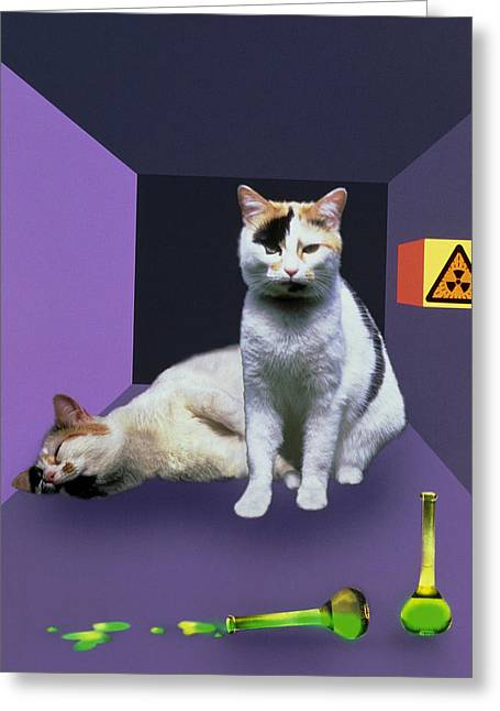Schrodinger's Cat Experiment Greeting Card by Mehau Kulyk