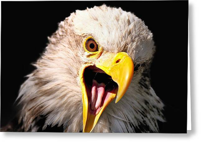 Screaming Eagle II Black Greeting Card