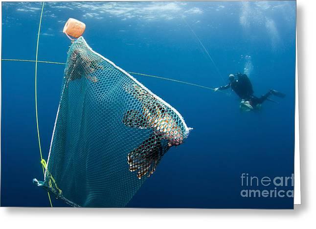 Scuba Diver Nets Invasive Indo-pacific Greeting Card