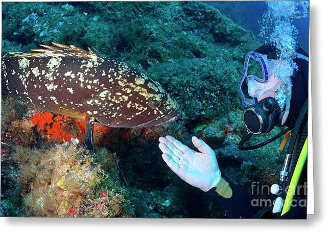 Scuba Diver With A Dusky Grouper Greeting Card by Sami Sarkis