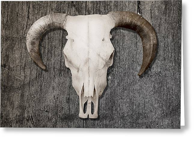 Scull Greeting Card by Stephen Walker