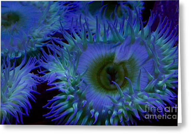 Sea Anemone Greeting Card by Xn Tyler