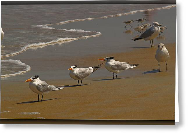 Sand And Sea Birds Greeting Card by Barbara Middleton