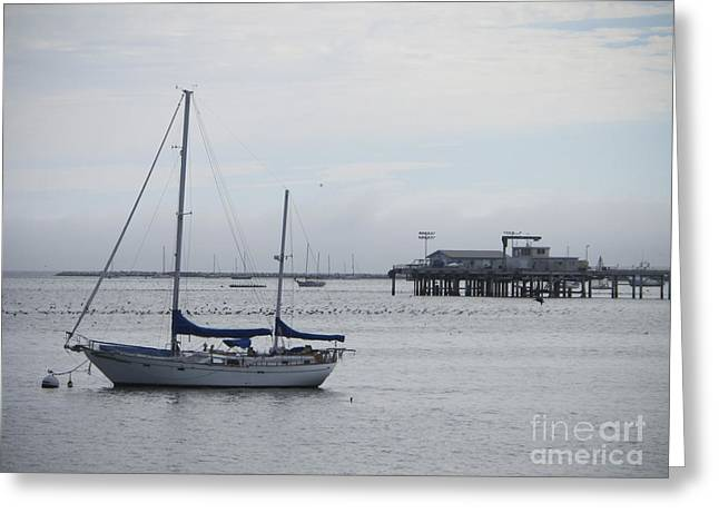 Greeting Card featuring the photograph Sea Breeze by Leslie Hunziker