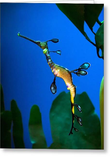 Sea Dragon Greeting Card by Anna Rumiantseva