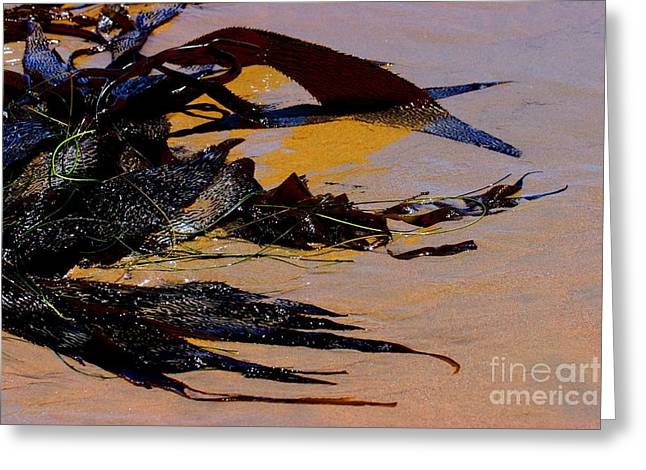 Pismo Beach Sea Drift Greeting Card by Tap On Photo