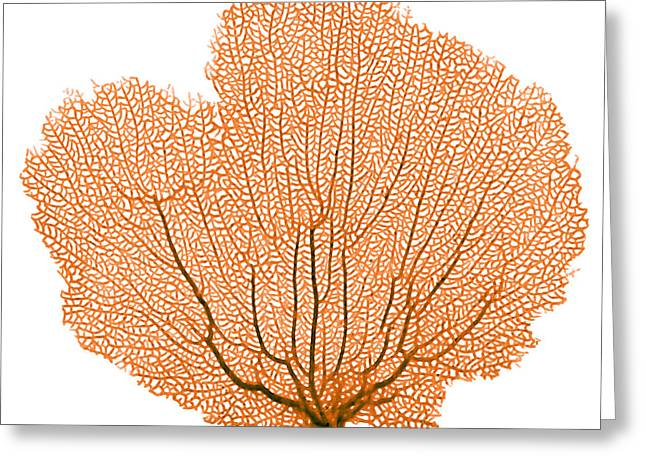 Sea Fan, X-ray Greeting Card by D. Roberts