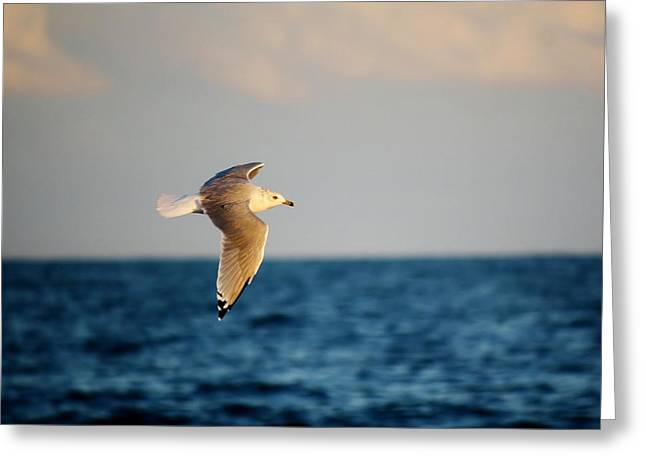 Sea Gull Over The Ocean Greeting Card by Paulette Thomas