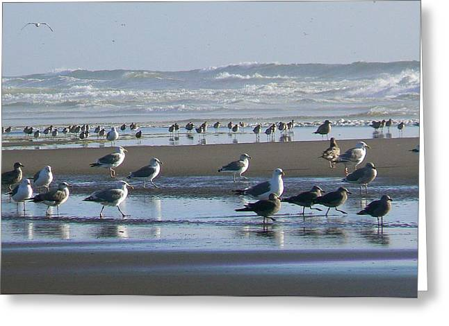 Sea Gulls And Breakers Greeting Card