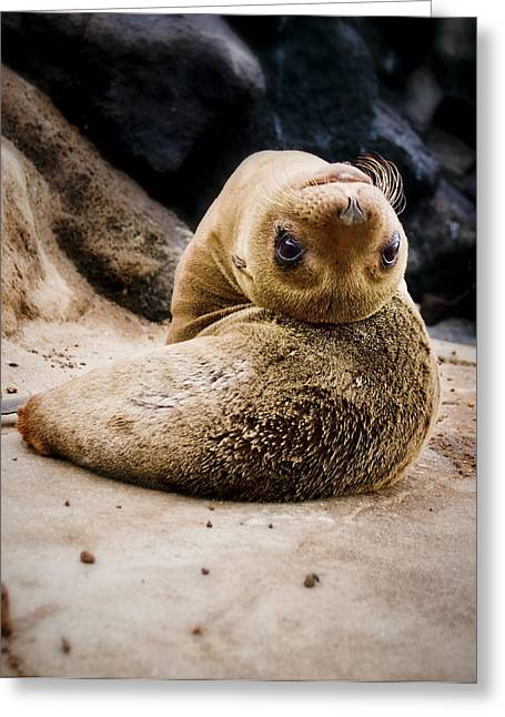 Sea Lion Pup Greeting Card