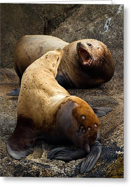Sea Lion Roar Greeting Card