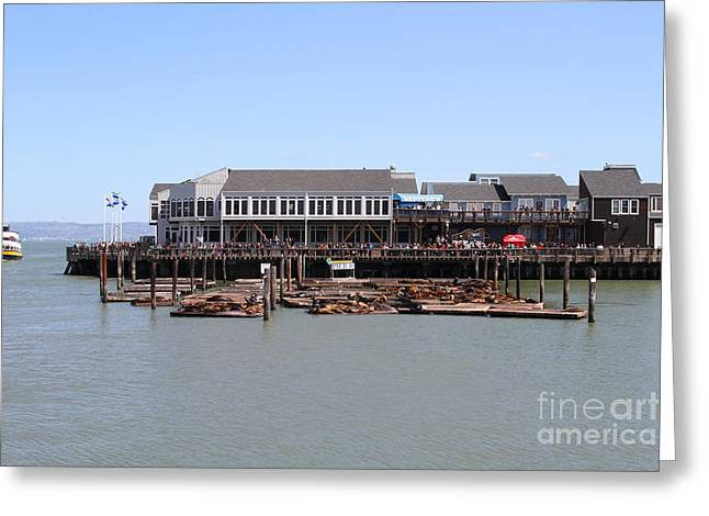 Sea Lions At Pier 39 San Francisco California . 7d14273 Greeting Card