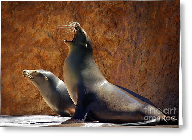 Sea Lions Greeting Card by Carlos Caetano