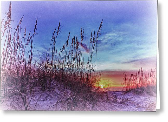 Sea Oats 5 Greeting Card by Skip Nall