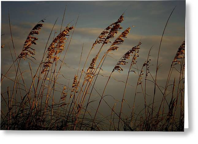 Greeting Card featuring the photograph Sea Oats by Joetta West