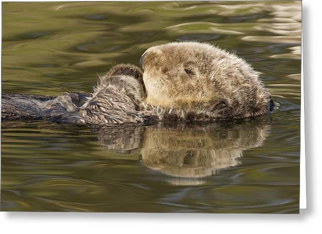 Sea Otter  Elkhorn Slough Monterey Bay Greeting Card