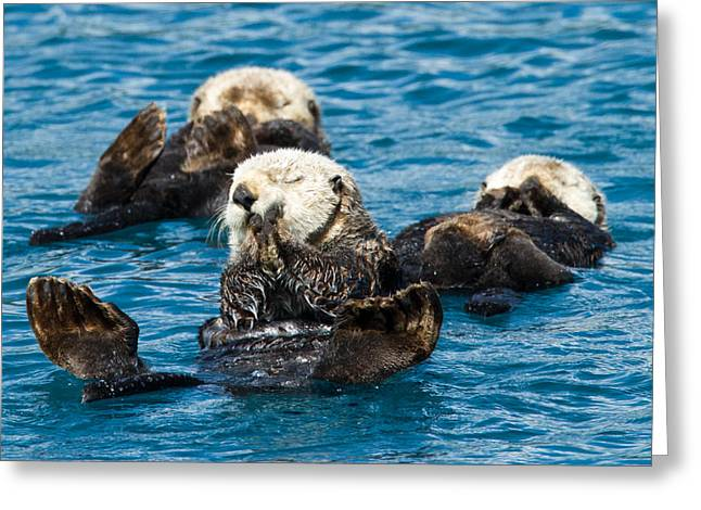 Sea Otter Naptime Greeting Card by Adam Pender