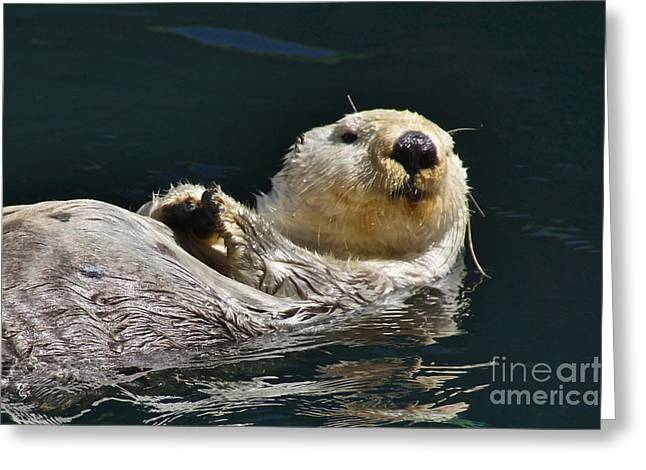 Sea Otter Greeting Card by Sean Griffin