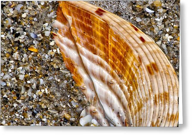 Sea Shell Greeting Card by Nancie Rowan