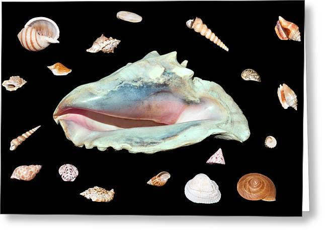 Greeting Card featuring the photograph Sea Shells by David Lester
