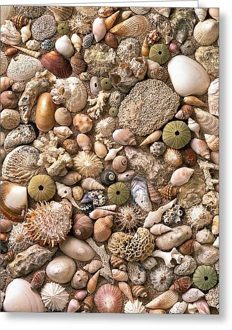Sea Shells  Greeting Card by Mauro Celotti