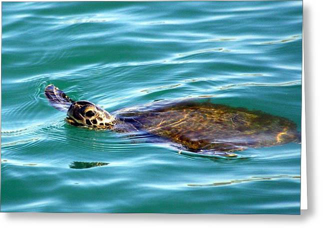 Sea Turtle Greeting Card by Jeanne Andrews