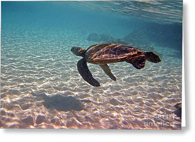 Greeting Card featuring the photograph Sea Turtle Shadow On Sand by Bette Phelan