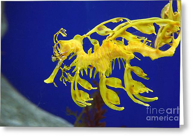 Seadragon Greeting Card