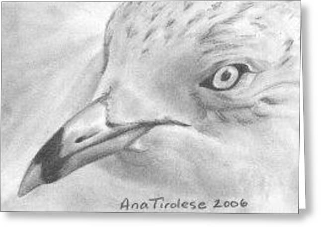 Greeting Card featuring the drawing Seagull - Aceo by Ana Tirolese