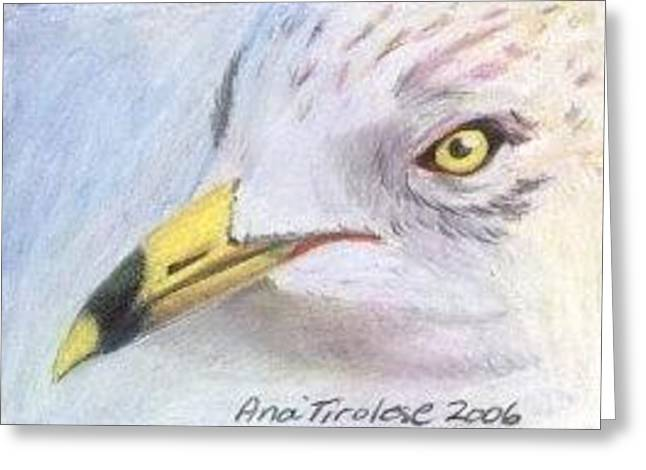 Greeting Card featuring the drawing Seagull 2 - Aceo by Ana Tirolese