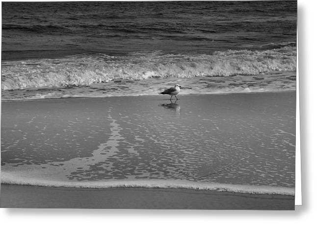 Seagull And Surf Greeting Card by Steven Ainsworth