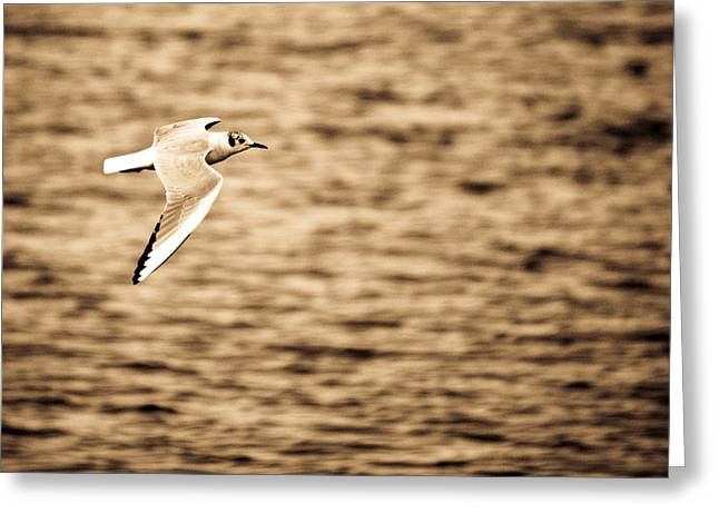 Seagull Antiqued Greeting Card